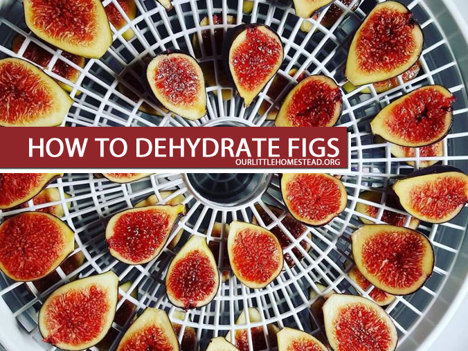 How To Dehydrate Figs