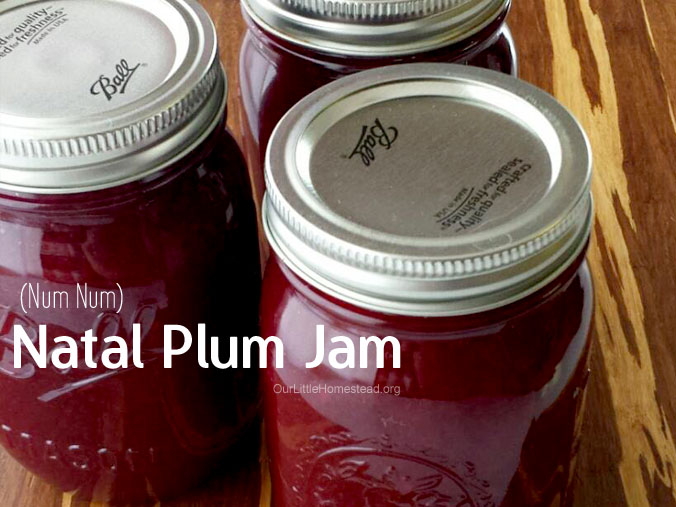 Natal Plum Jam Canning Recipe